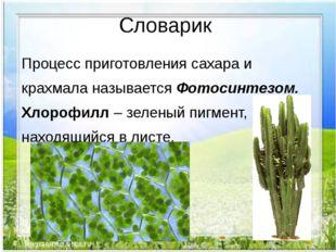 Словарик Процесс приготовления сахара и крахмала называется Фотосинтезом. Хло