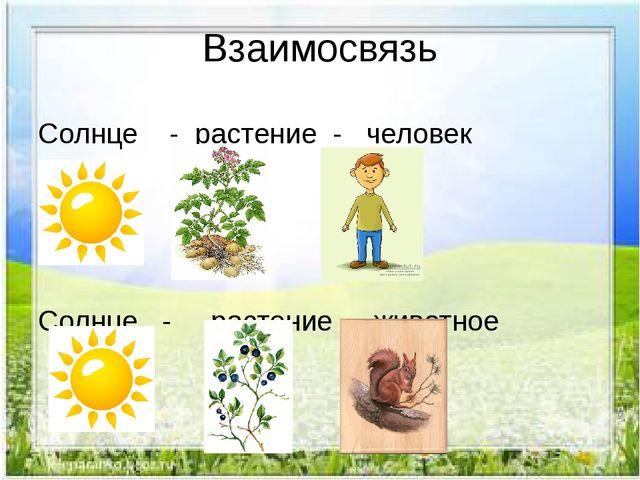 Взаимосвязь Солнце - растение - человек Солнце - растение - животное