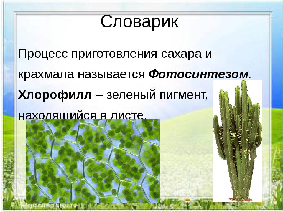 Словарик Процесс приготовления сахара и крахмала называется Фотосинтезом. Хло...