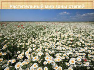 Растительный мир зоны степей Составила учитель географии КОУ ВО «Бутурлиновск