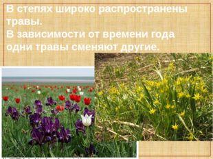 В степях широко распространены травы. В зависимости от времени года одни трав