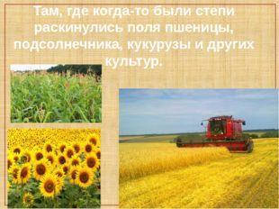 Там, где когда-то были степи раскинулись поля пшеницы, подсолнечника, кукуруз