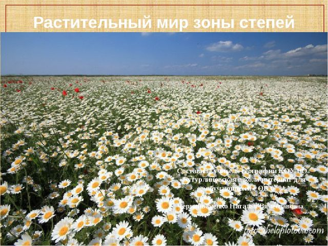 Растительный мир зоны степей Составила учитель географии КОУ ВО «Бутурлиновск...