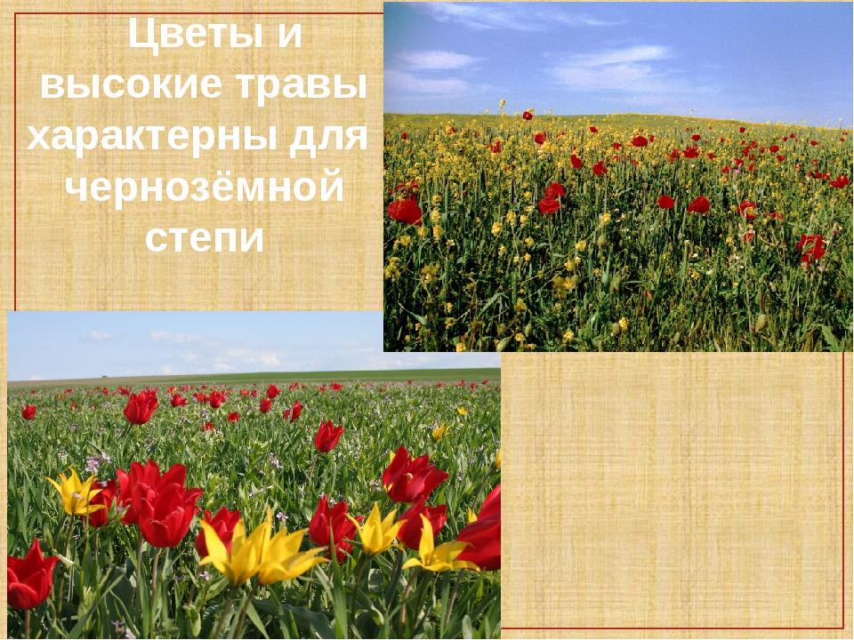Цветы и высокие травы характерны для чернозёмной степи