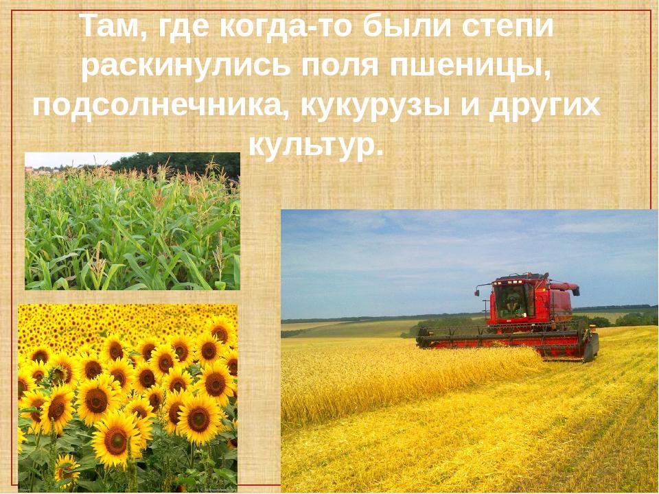 Там, где когда-то были степи раскинулись поля пшеницы, подсолнечника, кукуруз...