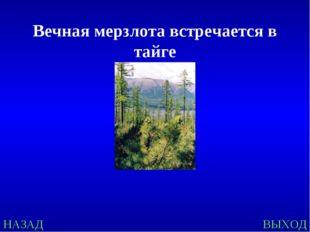 НАЗАД ВЫХОД Вечная мерзлота встречается в тайге