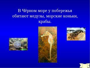 В Чёрном море у побережья обитают медузы, морские коньки, крабы.