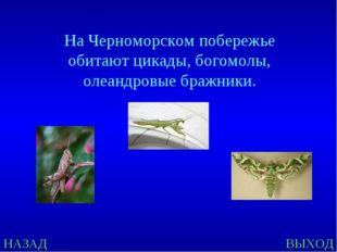 НАЗАД ВЫХОД На Черноморском побережье обитают цикады, богомолы, олеандровые б