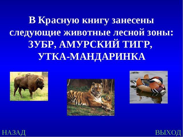 НАЗАД ВЫХОД В Красную книгу занесены следующие животные лесной зоны: ЗУБР, АМ...