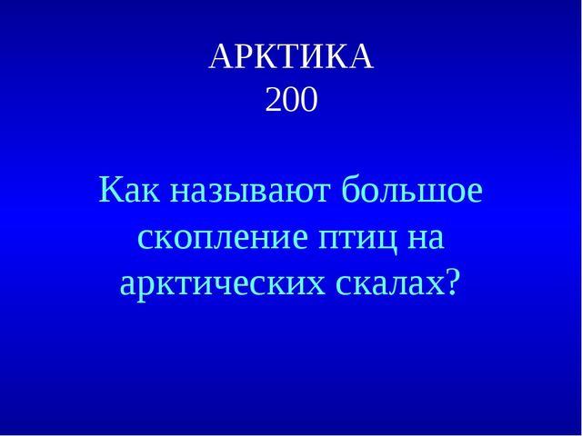 АРКТИКА 200 Как называют большое скопление птиц на арктических скалах?