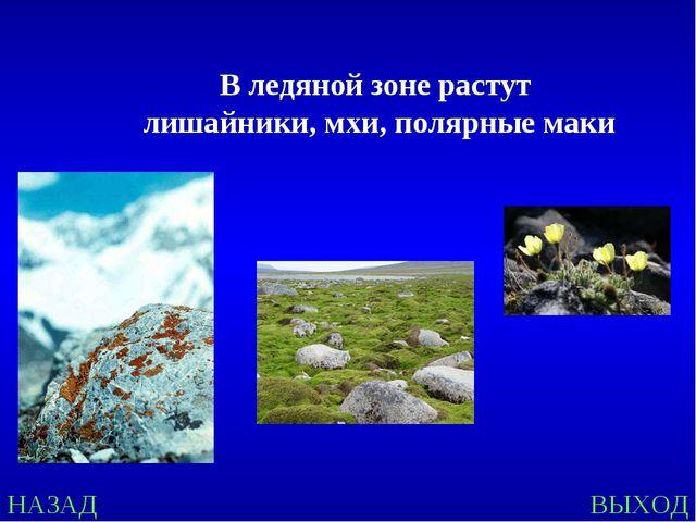 НАЗАД ВЫХОД В ледяной зоне растут лишайники, мхи, полярные маки