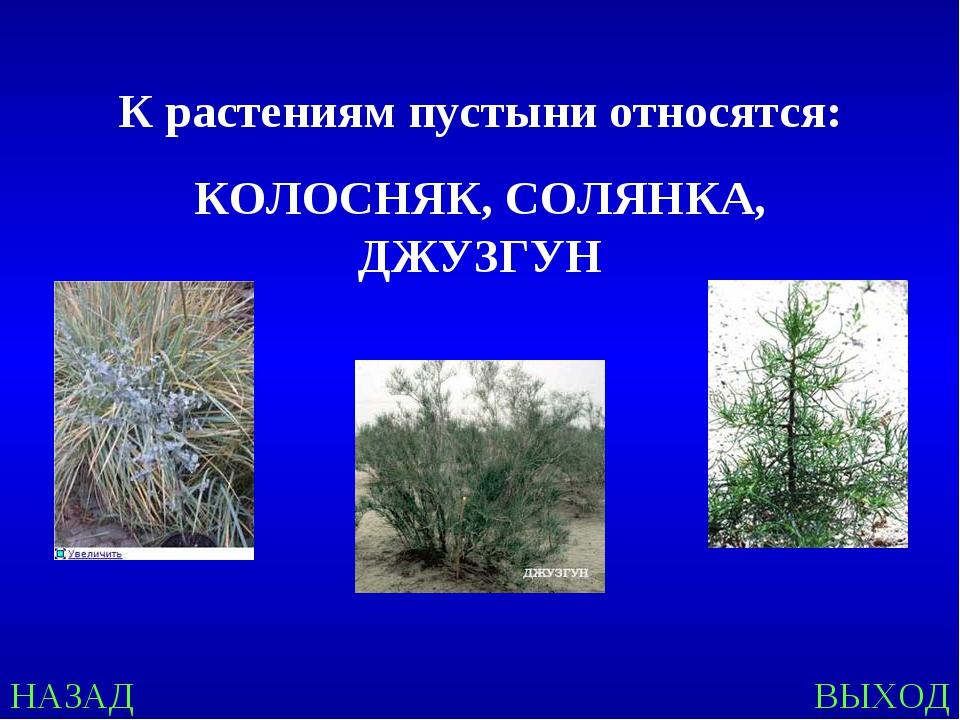 НАЗАД ВЫХОД К растениям пустыни относятся: КОЛОСНЯК, СОЛЯНКА, ДЖУЗГУН
