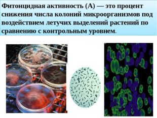 Фитонцидная активность (А) — это процент снижения числа колоний микроорганизм