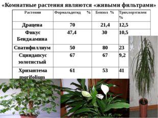 «Комнатные растения являются «живыми фильтрами» Растения Формальдегид %