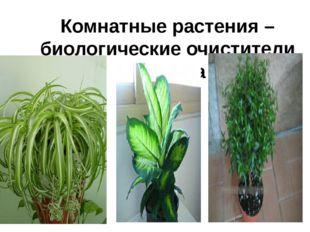 Комнатные растения – биологические очистители воздуха