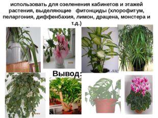 использовать для озеленения кабинетов и этажей растения, выделяющие фитонциды