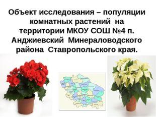 Объект исследования – популяции комнатных растений на территории МКОУ СОШ №4