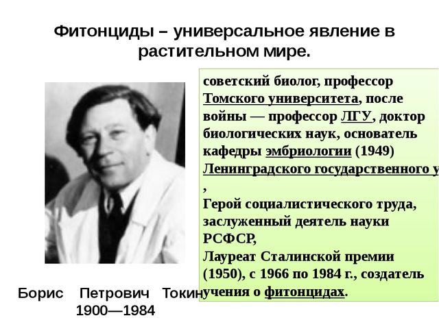Фитонциды – универсальное явление в растительном мире. советский биолог, проф...