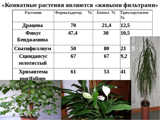 «Комнатные растения являются «живыми фильтрами» Растения Формальдегид %...