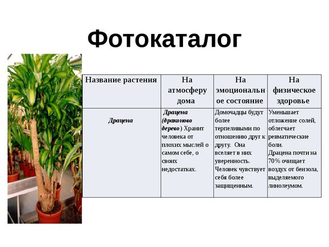 Фотокаталог Название растения На атмосферу дома На эмоциональное состояние На...