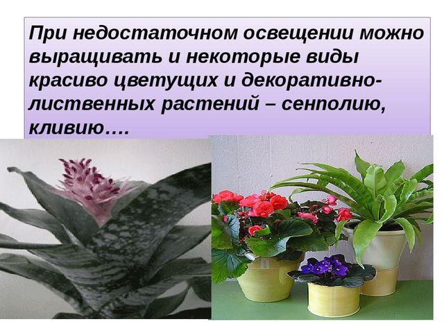 При недостаточном освещении можно выращивать и некоторые виды красиво цветущи...