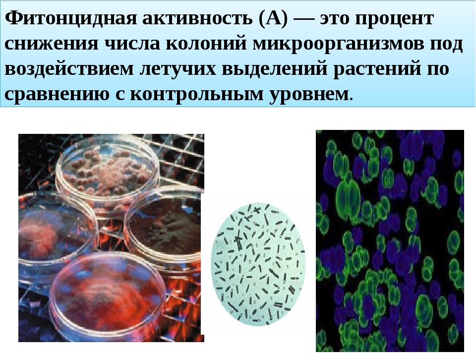 Фитонцидная активность (А) — это процент снижения числа колоний микроорганизм...