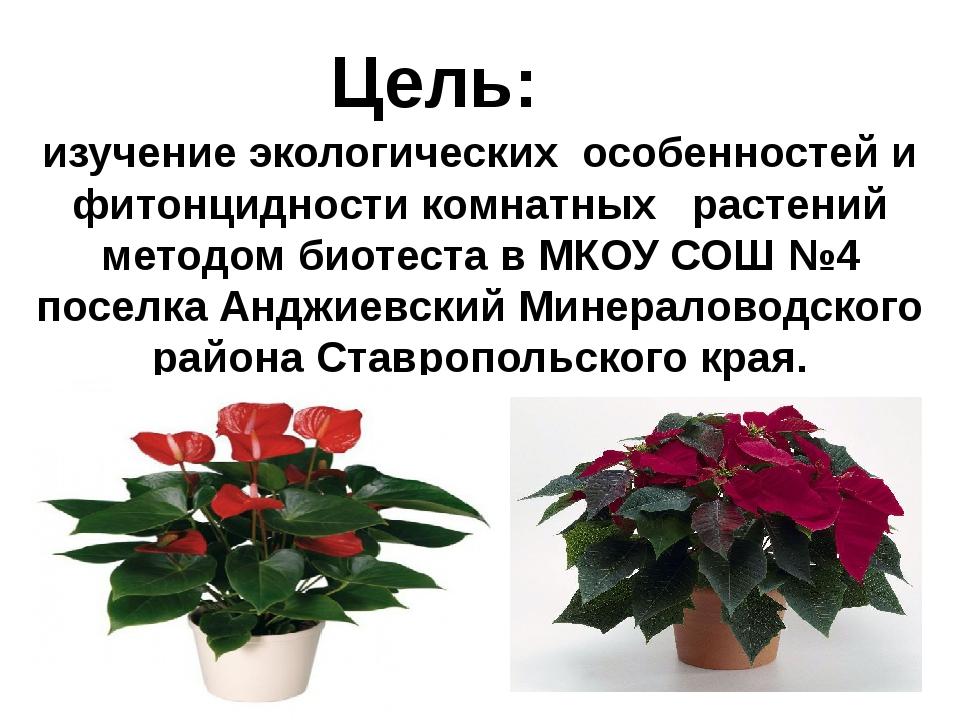 Цель: изучение экологических особенностей и фитонцидности комнатных  растен...