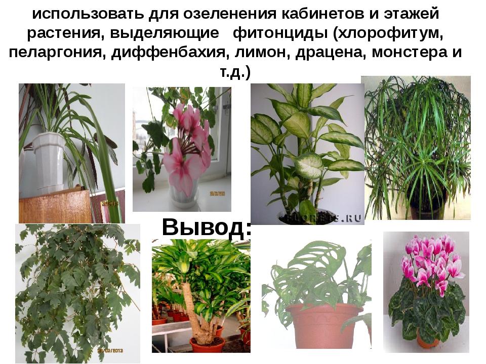 использовать для озеленения кабинетов и этажей растения, выделяющие фитонциды...