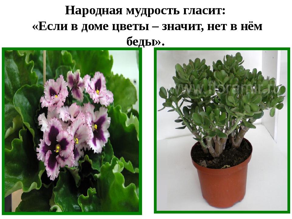 Народная мудрость гласит: «Если в доме цветы – значит, нет в нём беды».