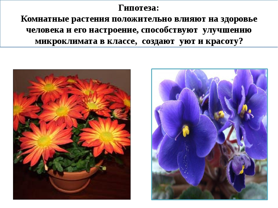 Гипотеза: Комнатные растения положительно влияют на здоровье человека и его н...