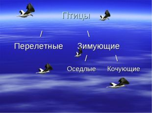 Птицы / \ Перелетные Зимующие / \ Оседлые Кочующие