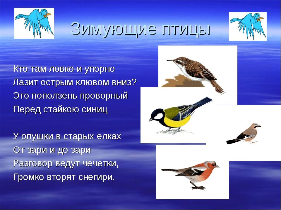 Зимующие птицы Кто там ловко и упорно Лазит острым клювом вниз? Это поползень...