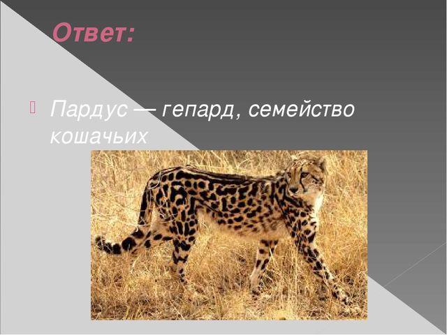 Ответ: Пардус — гепард, семейство кошачьих
