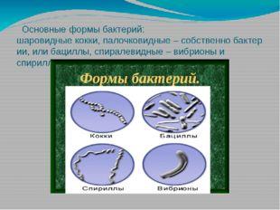 Основныеформы бактерий: шаровидныекокки,палочковидные–собственнобакте