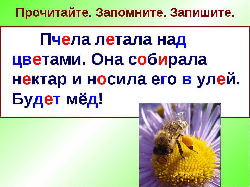 Прочитайте. Запомните. Запишите. Пчела летала над цветами. Она собирала некта...