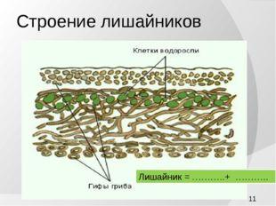 Строение лишайников Лишайник = ………..+ ………..