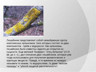 Лишайники представляют собой своеобразную группу комплексных организмов, тело