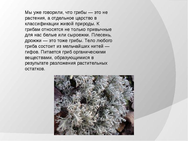 Мы уже говорили, что грибы — это не растения, а отдельное царство в классифик...