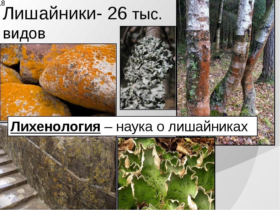 Лишайники- 26 тыс. видов Лихенология – наука о лишайниках