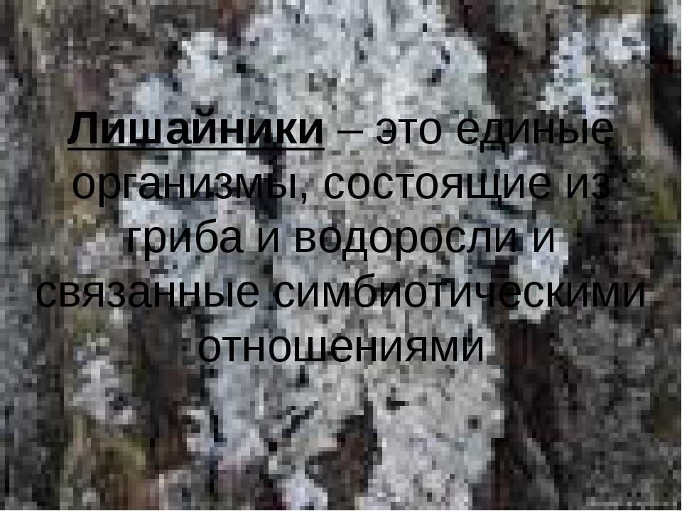 Лишайники – это единые организмы, состоящие из гриба и водоросли и связанные...