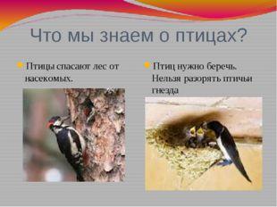 Что мы знаем о птицах? Птицы спасают лес от насекомых. Птиц нужно беречь. Нел