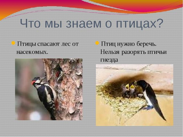 Что мы знаем о птицах? Птицы спасают лес от насекомых. Птиц нужно беречь. Нел...