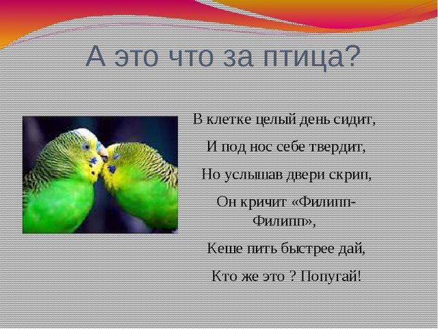 А это что за птица? В клетке целый день сидит, И под нос себе твердит, Но ус...