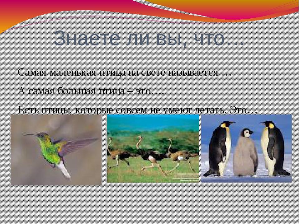 Знаете ли вы, что… Самая маленькая птица на свете называется … А самая больша...