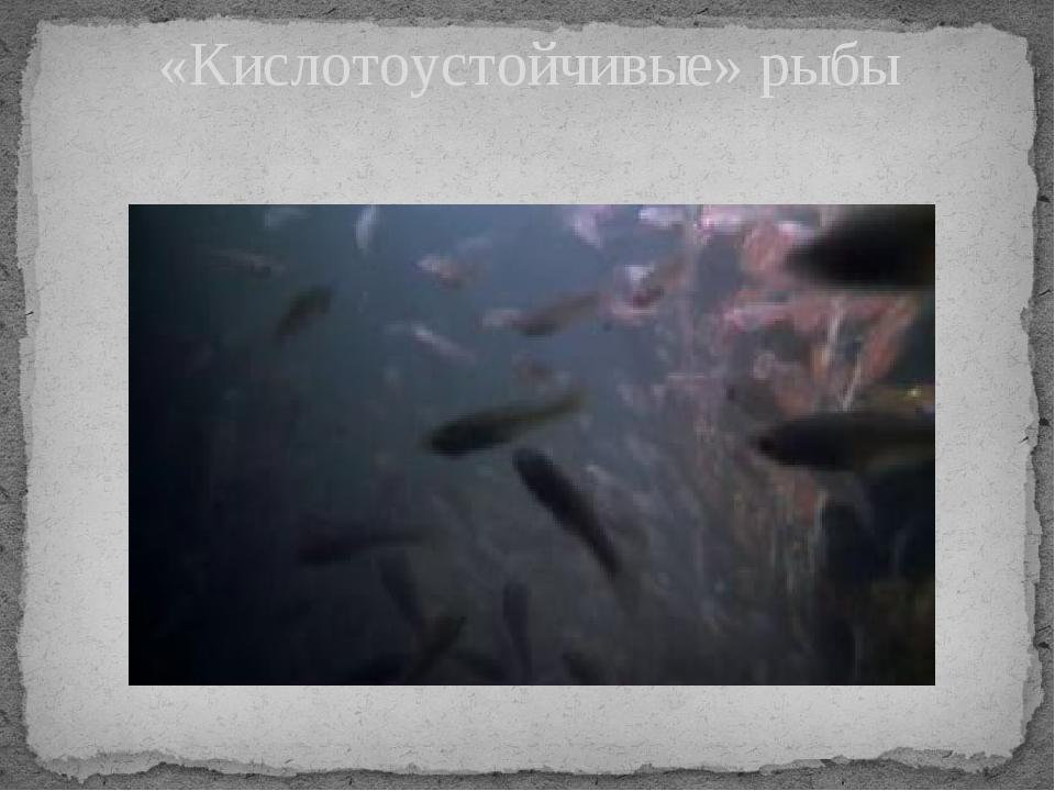 «Кислотоустойчивые» рыбы