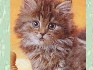 Третья тропинка - литературная. К. Анкундинов «Учёный кот» басня
