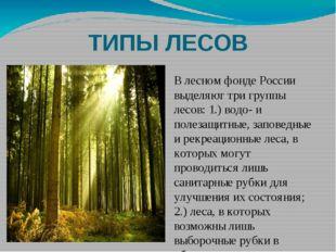 ТИПЫ ЛЕСОВ В лесном фонде России выделяют три группы лесов: 1.) водо- и полез