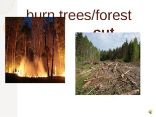burn trees/forest cut trees
