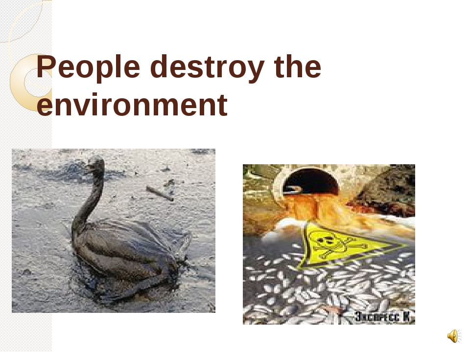 People destroy the environment oil kill birds pollute water