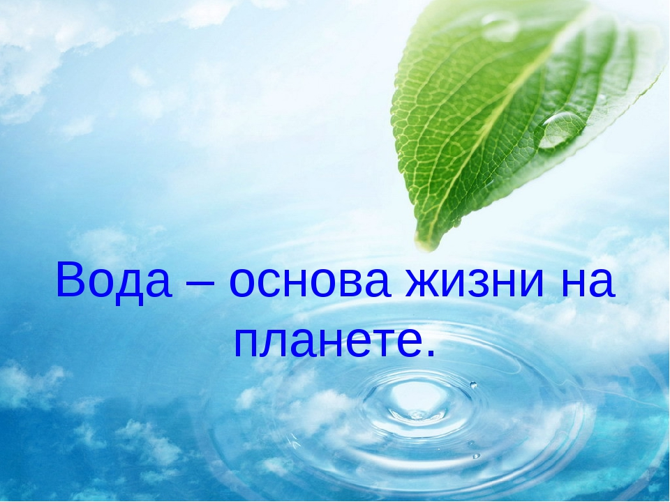Вода – основа жизни на планете.